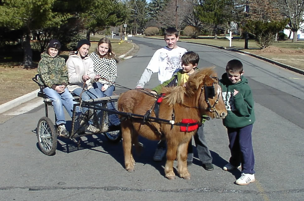 CountryTime Pony Rides - Mini Driving Pony - Trooper
